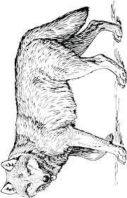 Kleurplaat Wolf 06 Topkleurplaatnl