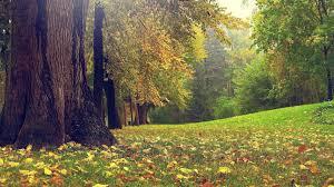 hd photography nature. Wonderful Nature 1920x1080 Background HD 18 And Hd Photography Nature P