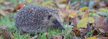 Image result for injured wildlife uk