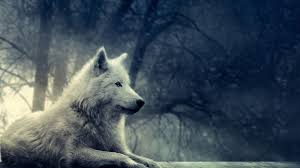 white wolf wallpaper. Unique Wolf White Wolf Wallpaper Throughout 2