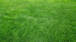 HD Background Green Grass Field Grain Wallpaper WallpapersByte