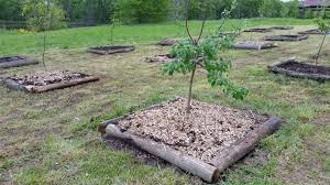 Trees For Sale At The Arbor Day Tree NurseryHow Often Should I Water My Fruit Trees