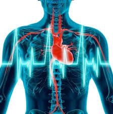 Variabilita Srdečního Tepu A Její Využití Hrv Měření Gone4run