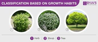 Types Of Plants Herbs Shrubs Trees Climbers And Creepers