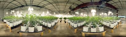 Craft Cannabis | The <b>Farm</b>