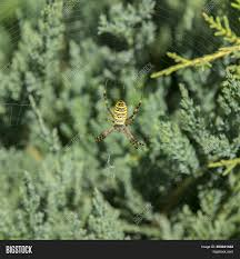 Free Spider Identification Chart Big Spider Common Image Photo Free Trial Bigstock