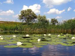 Image result for фото краÑота реки Орель на украине