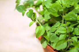 Stephanie Alexander Kitchen Garden Foundation Start Your Own Kitchen Garden Top Tips From Stephanie Alexander