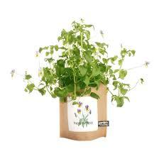 garden in a bag. Garden-in-a-Bag Birthday Violas Garden In A Bag