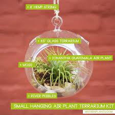 small terrarium hanging air plant terrarium kit small showcasejpg small diy cabin plans