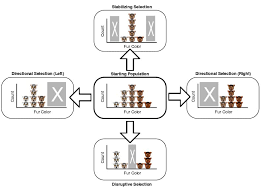 Directional Selection Stabilizing Directional And