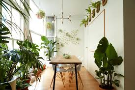 5 houseplants you can t kill