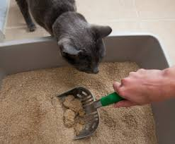 paying close attention to your cats litter box needs can save you both from messy problems mike mcfarlandthe hsus cat litter box
