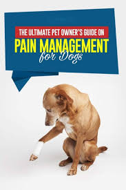 Tramadol For Dogs In Rummy Dogs Guide Pain Management Dogs