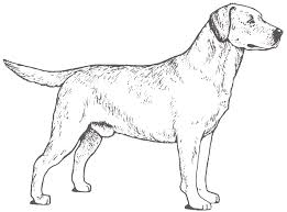 Small Picture Labrador Retriever Coloring Page Throughout Coloring Pages glumme