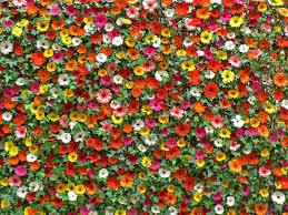 Flower Wall Flower Wall Ben Flickr