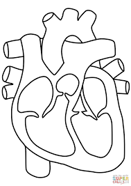 Small Picture Human Heart coloring page Free Printable Coloring Pages