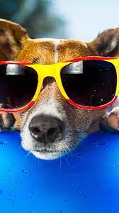 Funny dog, sunglasses, face, duck toy ...