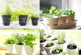 kitchen herb garden ideas carters
