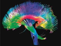 most people don't understand just how little we know about the human Wiring Brain with Synapses Brain Wiring Diagram #12