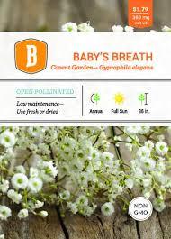 garden seed. Baby\u0027s Breath Covent Garden Seed