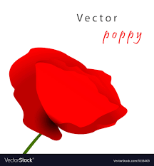 poppy template template card with poppy royalty free vector image