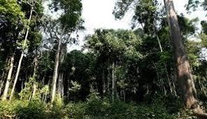Resultado de imagem para Cipem e Ibama definem entendimento sobre orientações para o setor florestal