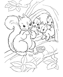 Small Picture Squirrel Coloring Pages