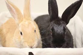 petsmart animals bunny. Contemporary Petsmart PetSmart Charities Of Canada Bunny Adoptions And Petsmart Animals Bunny