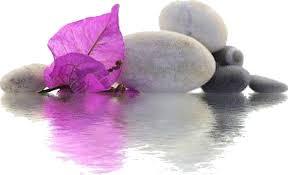"""Résultat de recherche d'images pour """"gif belles orchidées"""""""