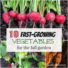 fall garden vegetables. speedy vegetable plants are a good choice for fall gardening. they can be used to garden vegetables
