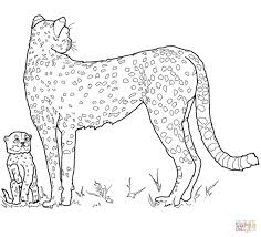 Cheetah Coloring Pages Free Coloring Pages