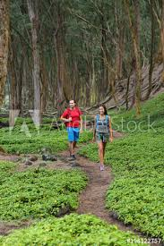 Outdoor nature people walking in forest hiking on trail path in