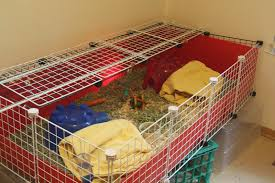 how build a guinea pig cage captures diy