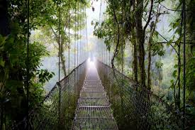 mistico arenal hanging bridge park a photo essay gone the  a mistico arenal hanging bridge fades away in to the fog