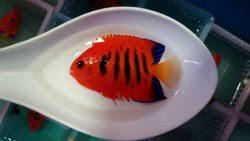 r aquarium fish