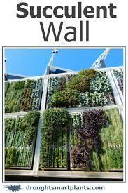 succulent wall vertical gardening