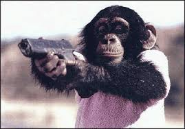 Image result for chimp gif