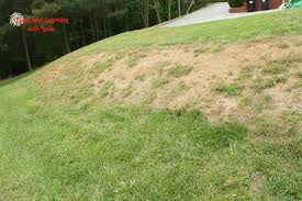 why don t you just use the little bit of flat land that you do have to which i answer i will need to eventually plant something on the slope anyway to