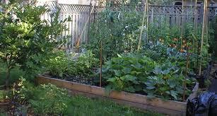 backyard gardening. Omar Gardens Blog Backyard Gardening R