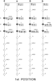 technique upright bass fingering charts faq courtesy of Bass Notes Diagram half position · first position bass notes diagram