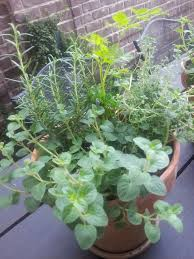 mixed herbs container gardening