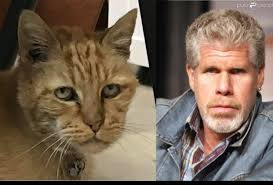 My cousin said my cat kind of looks like Ron Perlman : funny