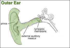 osha technical manual (otm) section iii chapter 5 noise Diagram Of Human Ear For Class 8 osha technical manual (otm) section iii chapter 5 noise occupational safety and health administration diagram of human ear for class 8