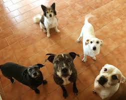 Psi K Adopci Z útulků Azylů A Neziskových Organizací