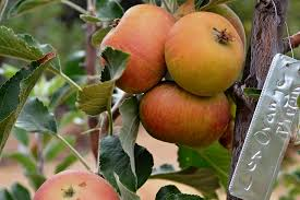 Fruit Trees For Sale  Fast Growing TreesNon Gmo Fruit Trees For Sale