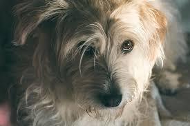 Hunde Tierarzt Bittet Auf Facebook Bleib Bei Deinem Hund Wenn