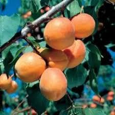 How To Grow Rambutan Fruit Trees U2013 Where Can You Grow RambutansWhat Fruit Trees Grow In Michigan