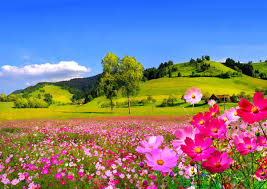 grass field background with flowers. Download Field Flowers Fresh Hills Grass Pink Floral Countryside Sky Nice Summer Nature Trees Freshness Cabin Beautiful Greenery Lovely Pretty House Village Background With E