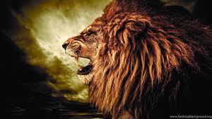 lion wallpaper hd widescreen. Plain Widescreen Popular And Lion Wallpaper Hd Widescreen